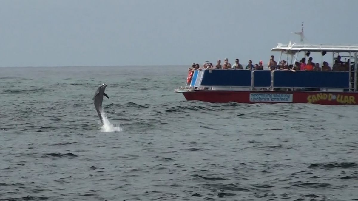 Book your Sunset Dolphin Cruise Online