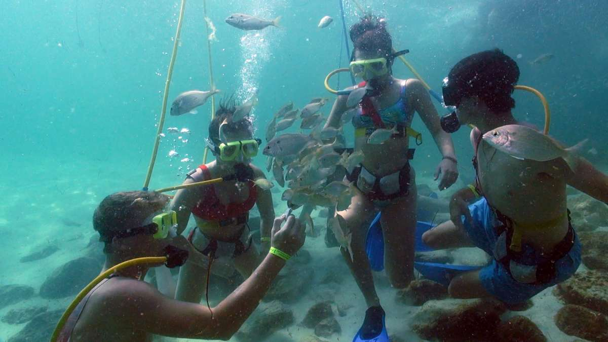 Destin Snorkel Photo Gallery
