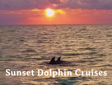 Sunset Dolphin Cruises